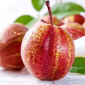 【应季上新】陕西彩虹梨 现摘梨子脆甜多汁彩红梨当季新鲜水果酥梨 彩虹梨 天然健康的美容佳品