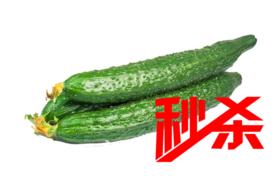【清脆爽口】黄瓜500g±20g