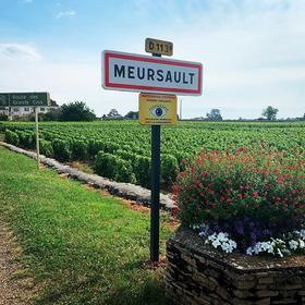 【上海】勃艮第精品小桌局,10款名家珍酿带你尝遍Meursault