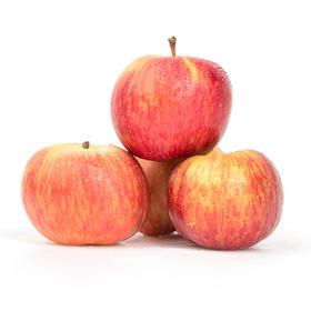 招牌-牛顿苹果(小)3斤