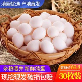 新鲜鸽子蛋30枚 农家散养鸽子蛋孕妇食品 宝宝辅食白鸽蛋农家蛋