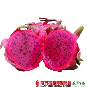 【珠三角包邮】金都一号红心火龙果 9头 净重约4.5斤 /箱 (7月15日到货)