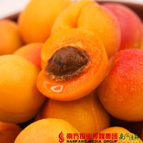 【全国包邮】听甜-知杏  蜂蜜小红杏 果重约2斤±1两(48小时之内发货)
