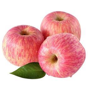 【山东】栖霞红富士苹果 清香脆甜 皮薄肉厚 汁水丰沛
