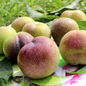 【原产地发货】汶川脆红李 半边红脆李(脱骨李) 5斤装 生鲜水果现摘发货