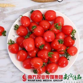 【珠三角包邮】农匠 新疆小番茄 3.3斤±2两/ 箱 (7月16日到货)