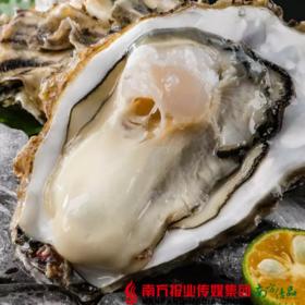 【珠三角包邮] 福海大华 乳山大生蚝(8-10头)(7月18日到货)