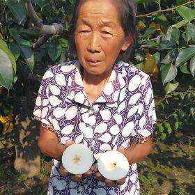 【助农扶贫】安徽砀山翠玉梨一级果 皮薄核小细腻无渣 爽脆香甜