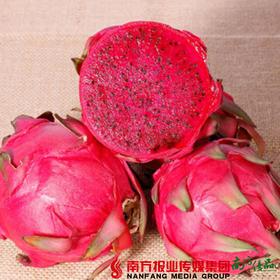 【珠三角包邮】贵州 红心火龙果  150g-200g/个  10个/箱 (7月24日到货)