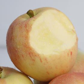 嘎啦红苹果 头茬新鲜下树  脆甜多汁 肉质细腻 老少皆宜 现摘现发 嘎拉5斤直邮