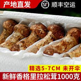 滇姑野生新鲜松茸5-7cm/1000g云南特产香格里拉松茸新鲜可晒干货