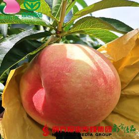 【珠三角包邮】阳山水蜜桃(湖景) 4.5斤±3两/ 箱 (7月24日到货)