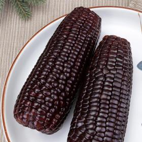 山西忻州甄选黑玉米6斤|非转基因 软糯甘甜 富含花青素【应季蔬果】