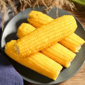 农田好货·鲜食玉米 | 富硒黑土地种的玉米,Q弹甜香不塞牙