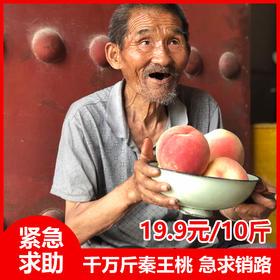 【紧急】数百万斤陕西秦王桃 紧急求销路10斤19.9元包邮