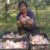 【战役助农】2020年新上市红苹果 陕西嘎啦苹果   新鲜水果 产地直供 现摘现发 商品缩略图1