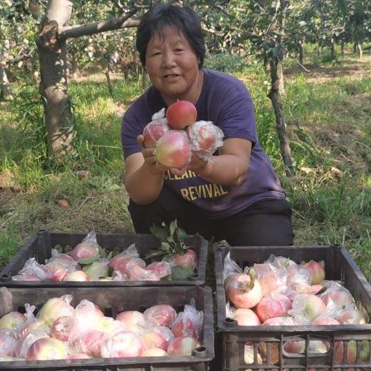 【战役助农】2020年新上市红苹果 陕西嘎啦苹果   新鲜水果 产地直供 现摘现发 商品图1