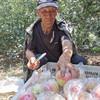 【战役助农】2020年新上市红苹果 陕西嘎啦苹果   新鲜水果 产地直供 现摘现发 商品缩略图0