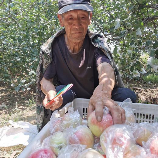 【战役助农】2020年新上市红苹果 陕西嘎啦苹果   新鲜水果 产地直供 现摘现发 商品图0