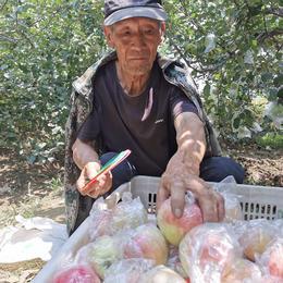 【战役助农】2020年新上市红苹果 陕西嘎啦苹果   新鲜水果 产地直供 现摘现发