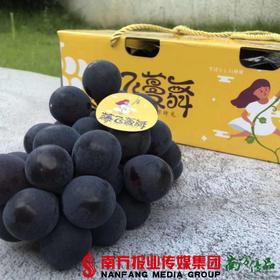 【珠三角包邮】腾飞曼舞福安巨峰  2.8斤±0.2 / 箱(8月5日到货)