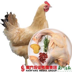 【全国包邮】阳山鸡 毛重3.5斤/只(72小时之内发货)