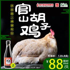 【珠三角包邮】【送丸庄一品鲜酱油 480ml/瓶】官山胡子鸡 2.5斤±5两/ 只(8月8日到货)