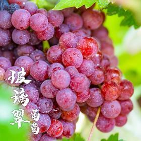 【顺丰冷链】新疆玻璃翠葡萄4斤|爽甜留香 颗颗无籽 皮薄肉脆【应季蔬果】