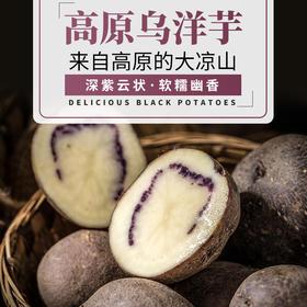 布拖乌洋芋大凉山马铃薯5斤新鲜七彩土豆 紫马铃薯黑洋芋山药蛋