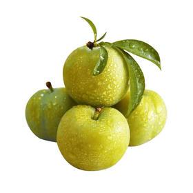 【陕西】新鲜上市 秋姬李脆甜多汁 高山种植  新鲜水果