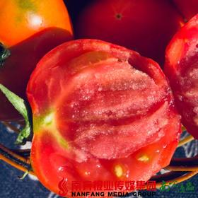 【全国包邮】宁夏银川戈壁滩的露天西红柿(12枚) 5斤±2两/箱  (72小时之内发货)
