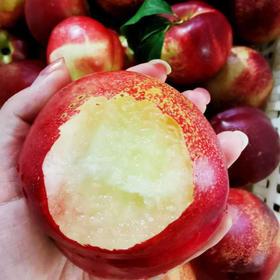 白雪蜜油桃5.2斤左右 13-20个 黑吉辽京津冀包邮