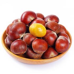 【地标产品】贵州板栗 粉糯香甜 |166年历史产地  百年板栗树 孕育不一般的布衣肾果
