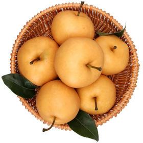 【山东】秋月梨 酥脆梨 口感清香 果核小 汁多甘甜