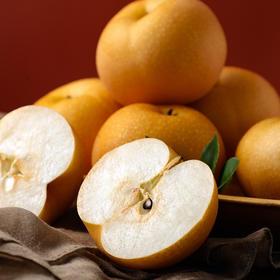 山东秋月梨礼盒装 产地现摘现发新鲜到家  新鲜酥脆 清甜可口 中秋馈赠礼品