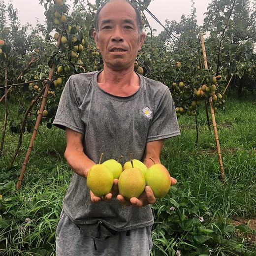 【助农产品】山西红香酥梨紧急待售 皮薄核小脆甜多汁包邮 商品图4