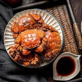 阳澄湖大闸蟹10只装 肉质鲜美 蟹膏肥满 蟹黄流油 现抓现发