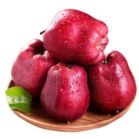 甘肃花牛苹果5-10斤|新鲜采摘 酥脆多汁 脆甜可口【应季蔬果】