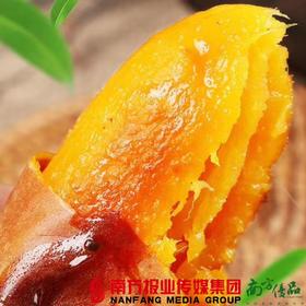 【全国包邮】山东沂蒙山烟薯   5斤/箱(72小时之内发货)