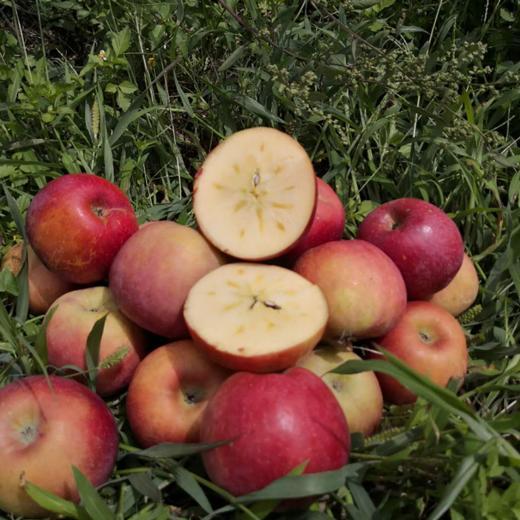全年日照长达3000小时 冰糖心苹果 盐源丑苹果 清甜脆口 肉质紧致 2600米高海拔高原苹果 商品图3