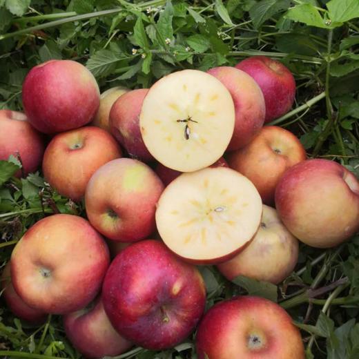 全年日照长达3000小时 冰糖心苹果 盐源丑苹果 清甜脆口 肉质紧致 2600米高海拔高原苹果 商品图2