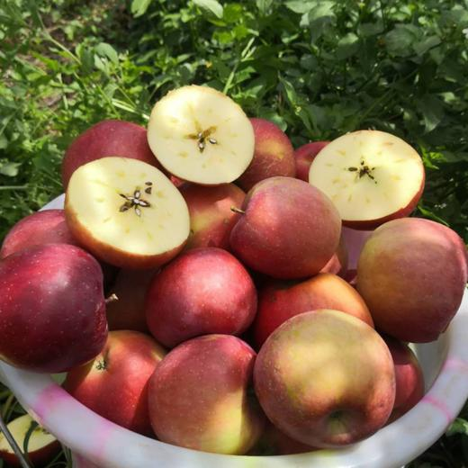 全年日照长达3000小时 冰糖心苹果 盐源丑苹果 清甜脆口 肉质紧致 2600米高海拔高原苹果 商品图1
