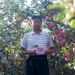助农丨山西红富士红星  脆甜多汁 果香浓郁  带箱约10斤装 现摘现发