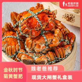 现货礼盒装大闸蟹公蟹膏满母蟹黄肥螃蟹
