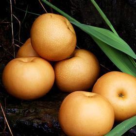 [秋月梨] 肉质脆嫩 香甜多汁 家庭装约4.8斤(5-6个左右)