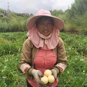 【助农公益】助力销售人参果给果农带来希望 19.8元/3斤带箱  包邮
