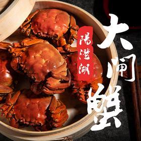 阳澄湖大闸蟹 6-10只礼盒装|膏红肉鲜 蟹肥饱满【生鲜熟食】