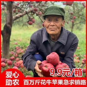 【比白菜便宜】助力甘肃天水高原上百万斤花牛苹果仅9.9元每箱!