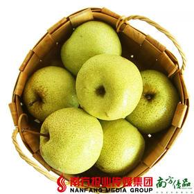 【全国包邮】安徽砀山酥梨  5斤±2两/箱(9个左右装)(72小时内发货)