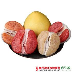 【珠三角包邮】四色彩柚礼盒 8.5-10斤/箱(9月18日到货)